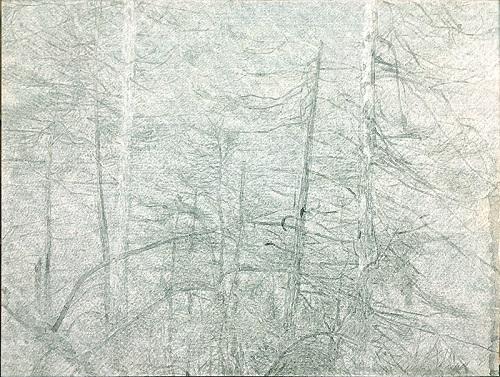 曹轶,黑森林No.3,149x198cm,纸本丙烯,2018 .jpg